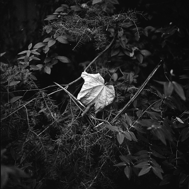 Leaf, SW9.