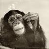 Panya guckt Seifenblasen (Tierpark Schwaigern)