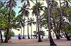 Bayahibe : tante palme da cocco su questa famosa spiaggia