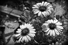 A Study of Nature in Monochrome