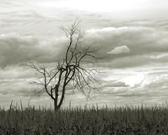 alone in the corn field