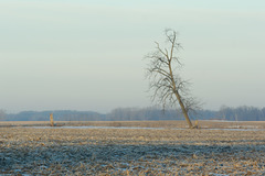 Another tree. In another field.
