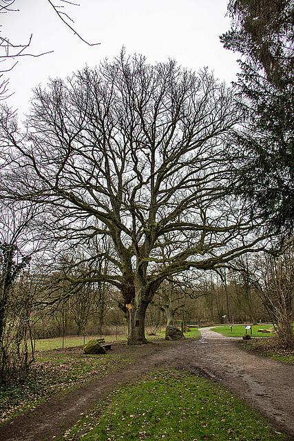 20160209 0009VRAw [D~LIP] Baum, Landschaftsgarten, Bad Salzuflen