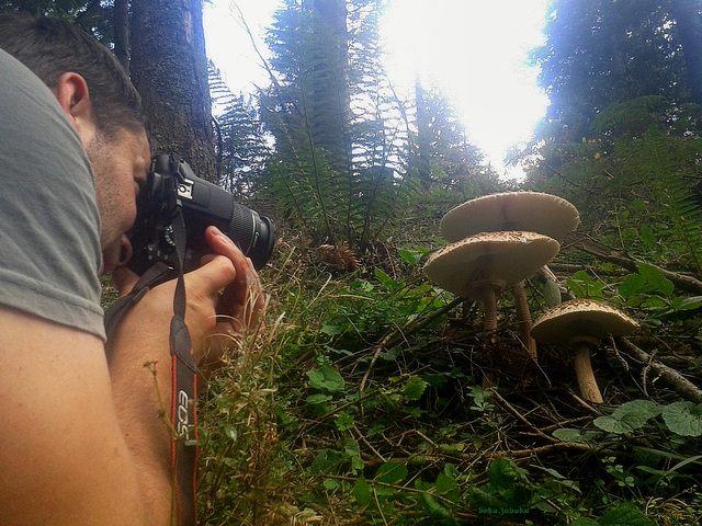 Mushroom colector and photographer