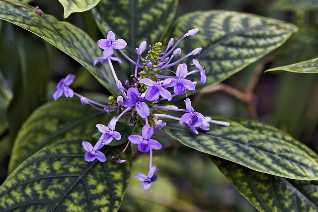Purple Counterpoint – Brooklyn Botanic Garden, New York, New York