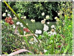 Waikato River From Hamilton Gardens.