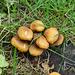 Pilze im Juni im Schlossgarten Geiboldehausen