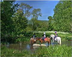 Ponies in the River Colne
