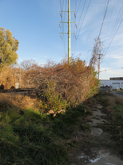 Evening plants and electricity beside a railroad in a city in early November.