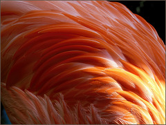 A Feast of Feathers, Color, Light and Shadow