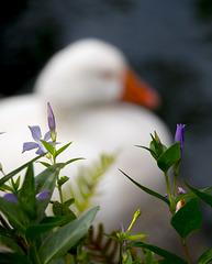 Spring by a Pond