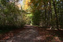 Herbst im Taubergießen