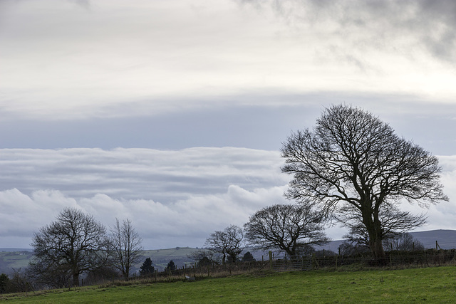 Whirlow Farm cloudscape with trees 2