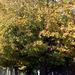 Fall Tree, 2009
