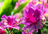 """Blüten in den """"Lost Gardens of Heligan"""""""