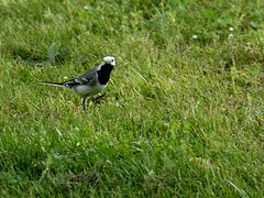 Vreemde vogel ???