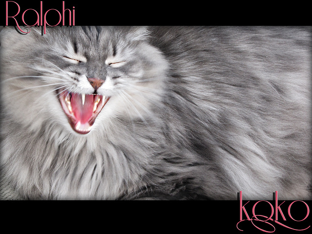 Ralphi showing her teeth