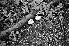 Fungi, Dog Kennel Hill.