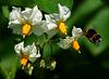 Katoffelblüten - Quiz beendet