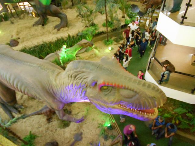 DSCN2693 - Tyrannosaurus rex, Theropoda