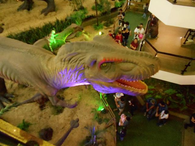 DSCN2694 - Tyrannosaurus rex, Theropoda