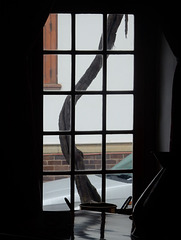 window, car, tree