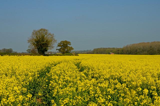 Fields near Church Eaton