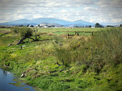 Fields, fences and sky