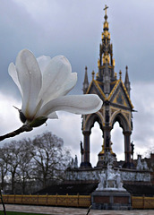 Albert Memorial and flower