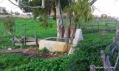 Piccolo fontanile all'interno della tenuta della Farnesiana. - Allumiere (RM) Italy