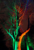 Beleuchteter Botanischer Garten