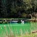 Der grüne See - The green pond