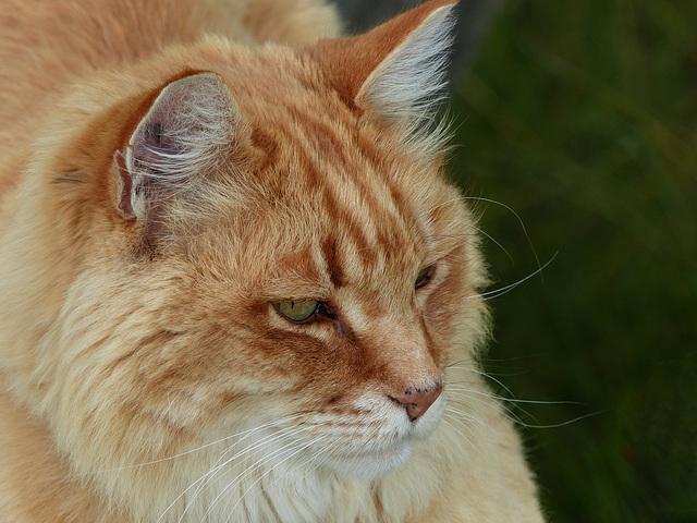 Lynn's cat at Marsland Basin