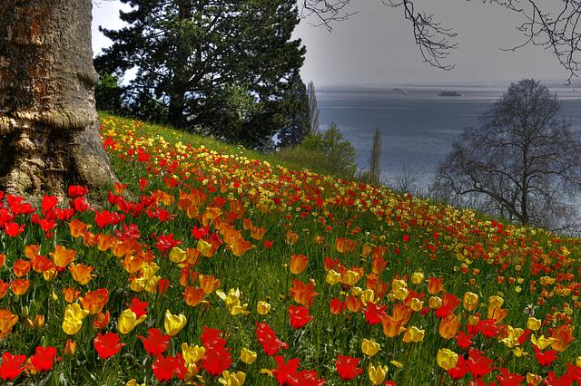 Die Blumeninsel Mainau im Bodensee