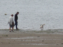 This little dog was loving running in and out of the sea