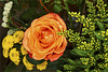 A salmon-colored rose