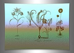 11052019 grad botanicals