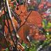 Turned leaves...