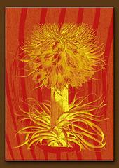 11052019 orange botanical