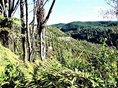 Verdent Hillsides.