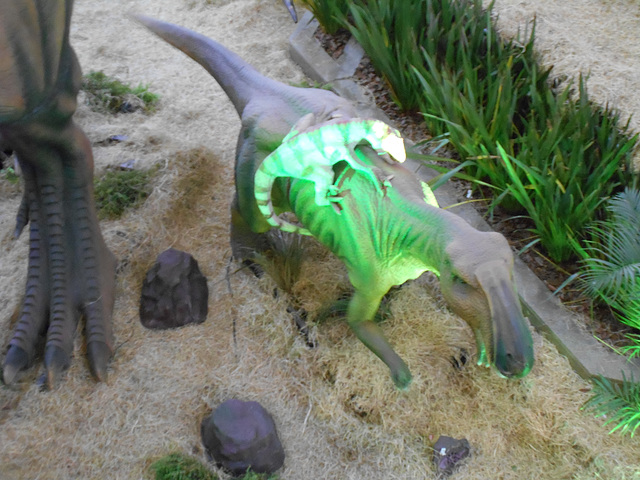 DSCN2701 - Maiasaura peeblesorum, Hadrosauridae Ornithopoda