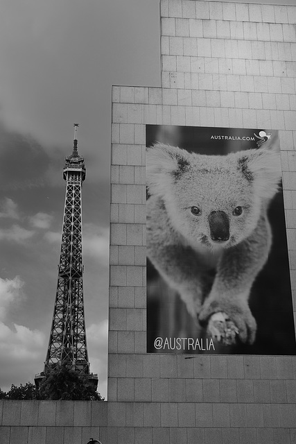 A koala in Paris