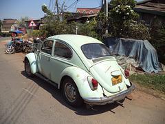 Laotian volks beetle / Coccinelle laotienne