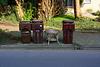 Wheelie bins with table