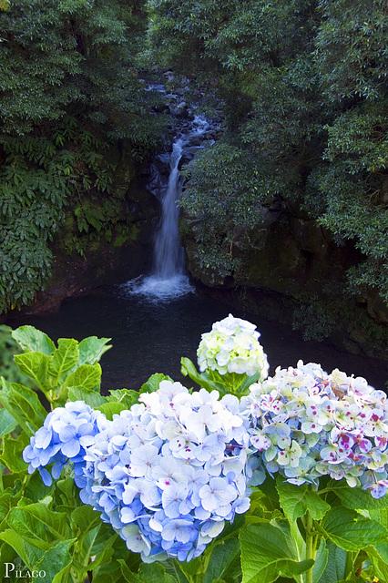 Parque Natural da Ribeira dos Caldeirões, São Miguel Island / Azores (Açores)