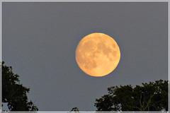 La lune du 12 Septembre 2019: Ce soir la lune est belle........
