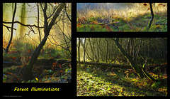 Forest Illuminations