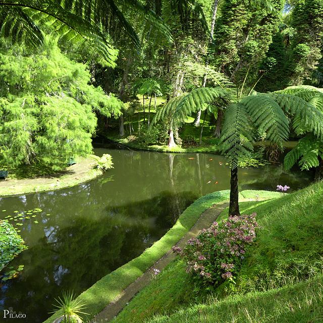 Parque Terra Nostra, São Miguel Island / Azores (Açores)