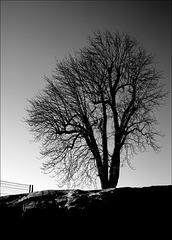 Baum an Zaun