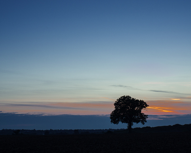 Sept 29: lone tree at sunset